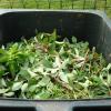 dechets verts 1024x768