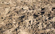 terre vegetale